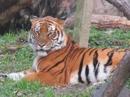 Kankaria Zoo Ahmedabad: Kankaria Zoo Latest Timing and Ticket Price - Kankaria Lake Zoo